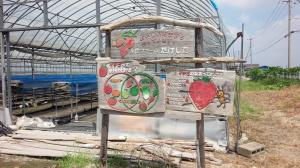 楽農ファームたけした イチゴ